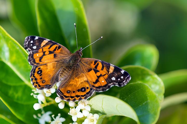 Papillons joejpg