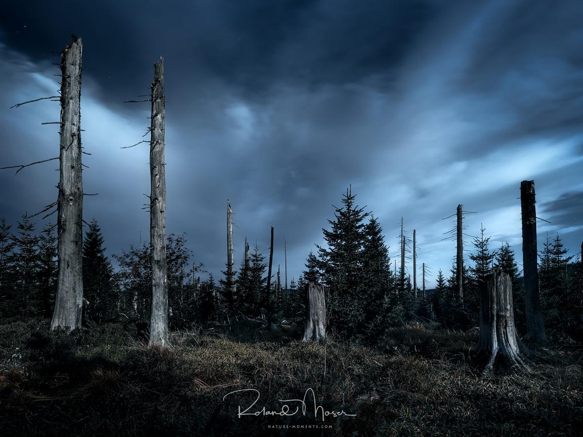 Baxerischer Wald-Vollmondnachtjpg