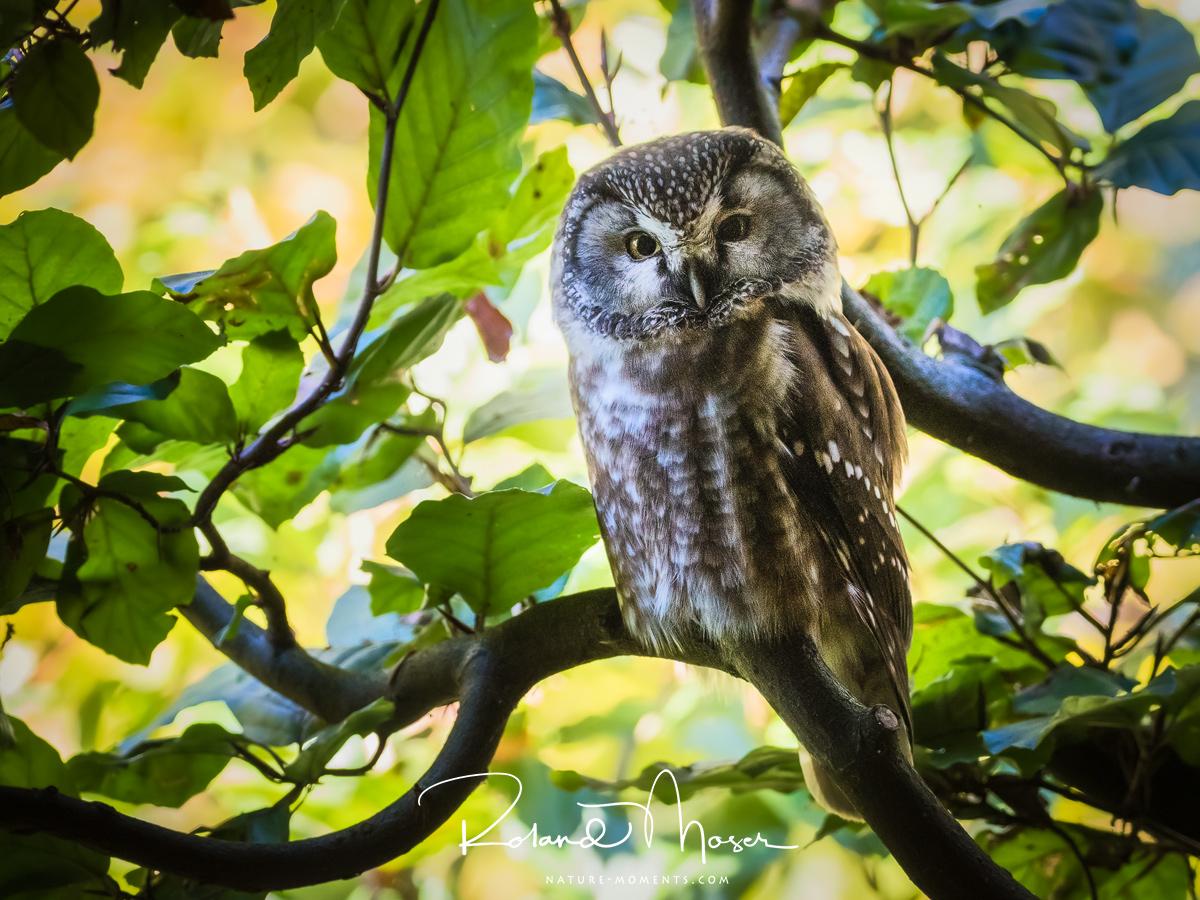 Bayerischer Wald-Wildlifejpg