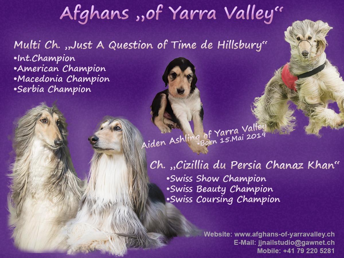 Afghans of Yarra Valley Wurfmeldungjpg