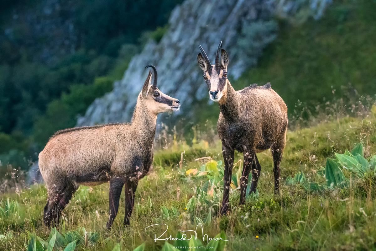 Wildlife-Vogesenjpg
