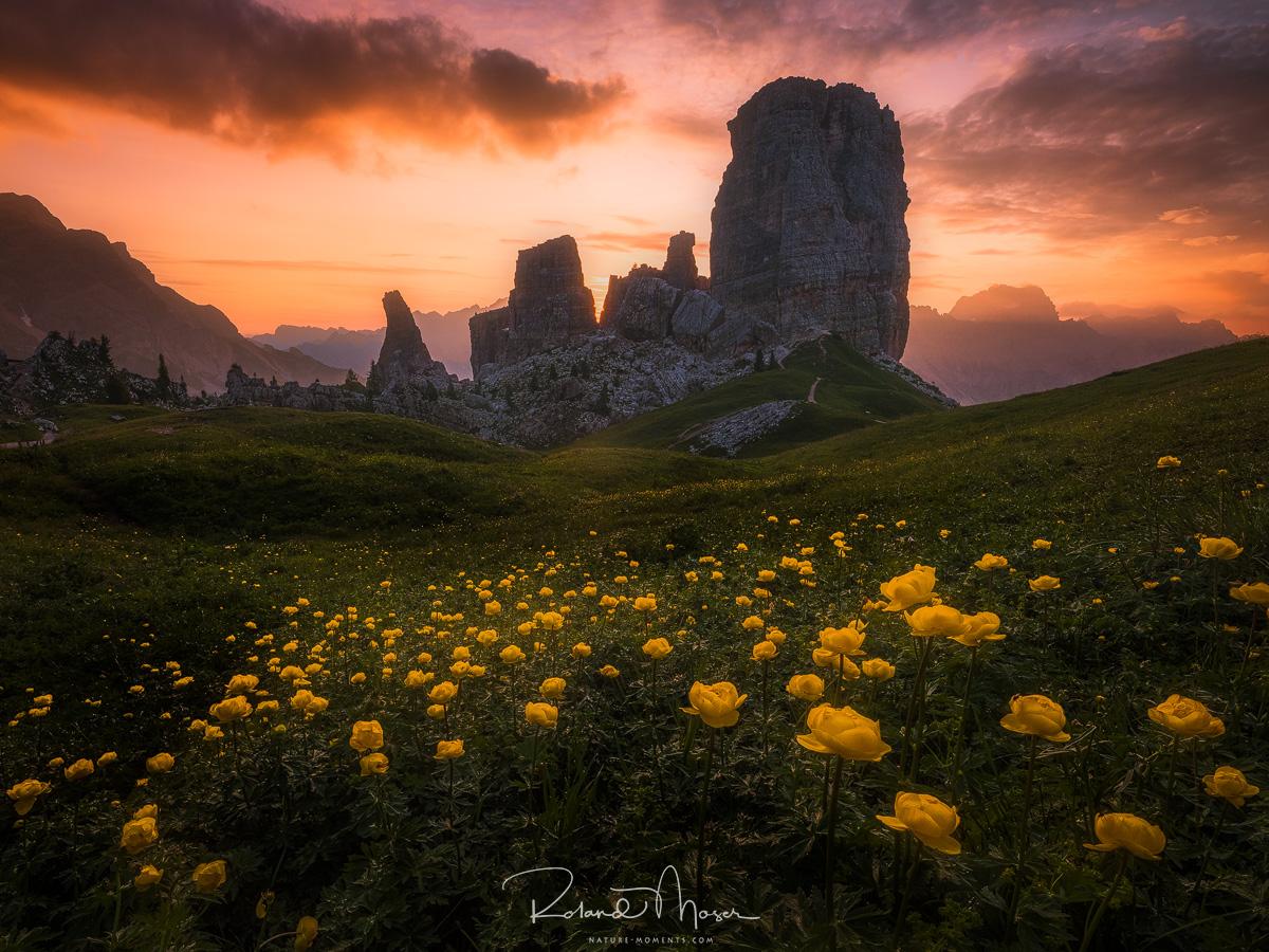 Dolomites-Dolomiten-Cortina-Bergblumen-Daemmerung-Cinque Torrijpg