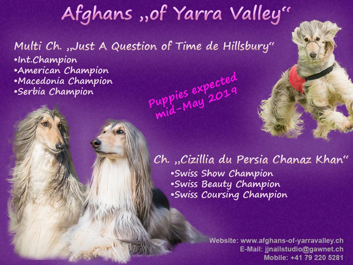 Afghans of Yarra Valley-Deckmeldungjpg