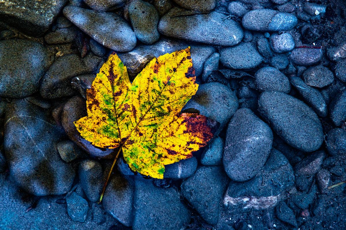 Ahornblatt-Herbst -Steinejpg