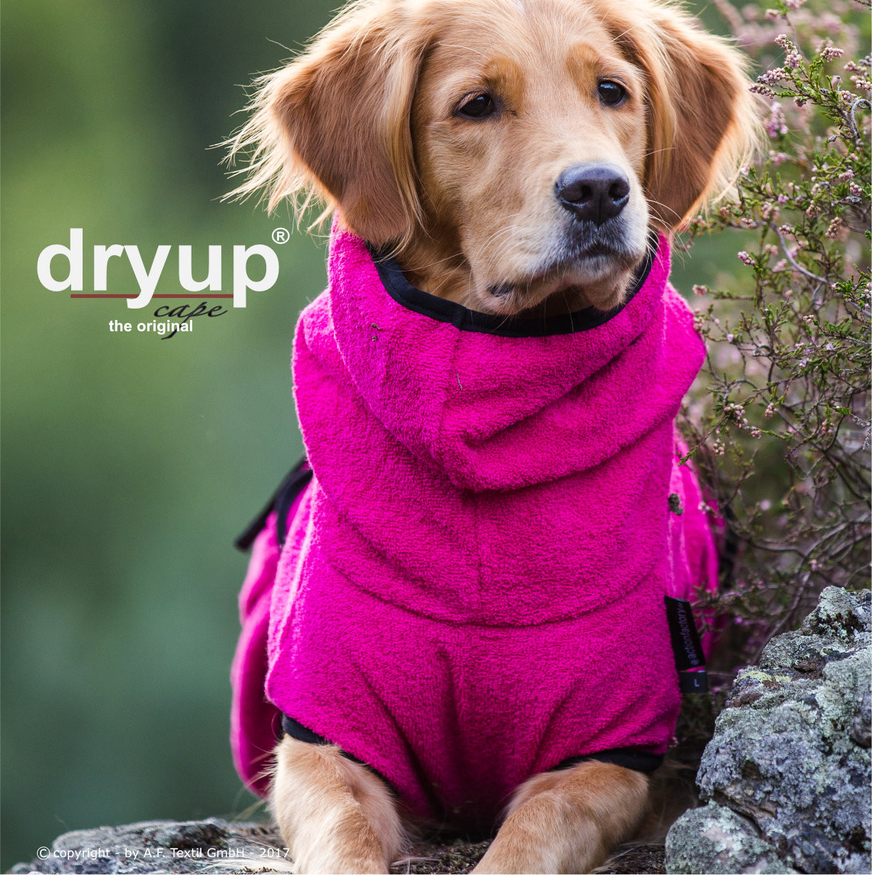 Dryup Cape Pink